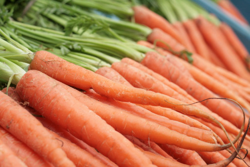 Orange Carrots with Stems
