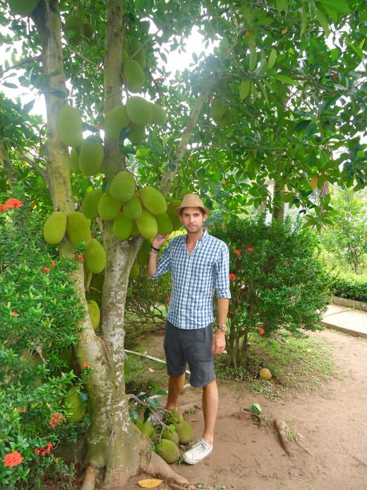 Mekong Delta pictures: Jackfruit