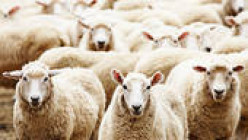 "Understanding the ""Sheep Mentality"" of our Global Society"