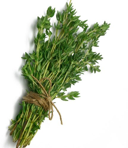 Fresh Bunch of Thyme
