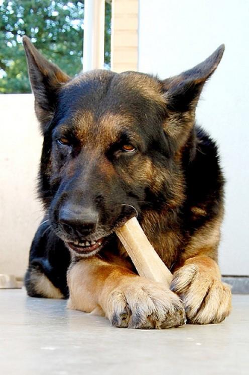 Can I Give My Dog a Bone?