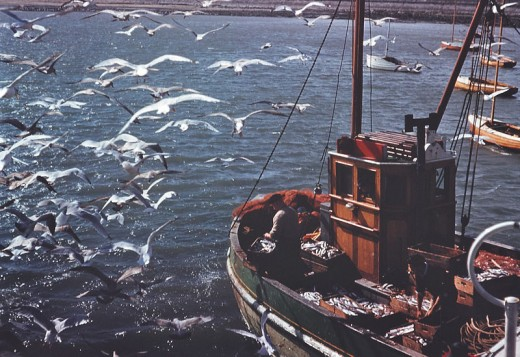 Many ships and fishing trawlers are reported to be haunted.