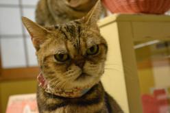 Top 10 Popular Female Cat Names