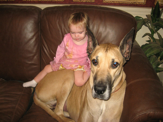 Great Dane Family Great Danes Best Dogs For