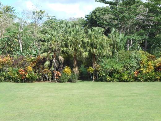 Gardens at Vailima