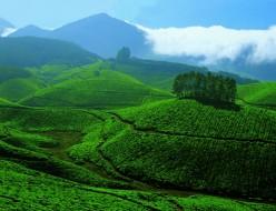 Kerala tourism; Historic natural attractions of Munnar