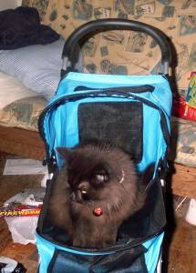 Carbon sitting in the stroller