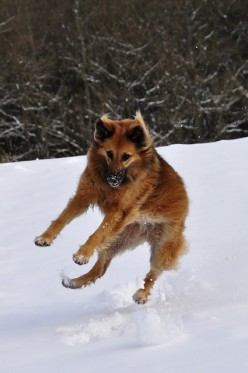 Dog Antifreeze Poisoning