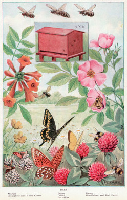 Learn All About Bees for Kids With This Fun Story