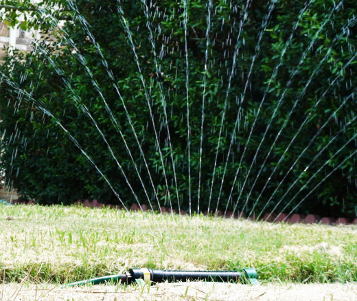 Watering during a dry spell is one of the lawn maintenance musts.