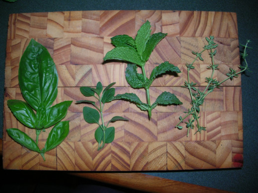 Basil, Oregano, Mint and Thyme.