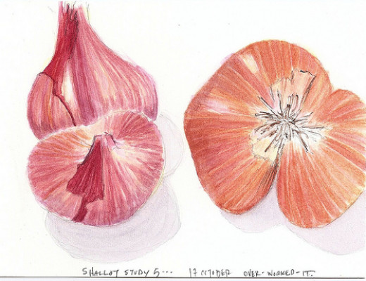 As you can see, shallots have the same cloving properties as garlic.