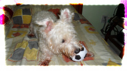 Ways to bond with your dog, its importance and some games to enhance your relationship