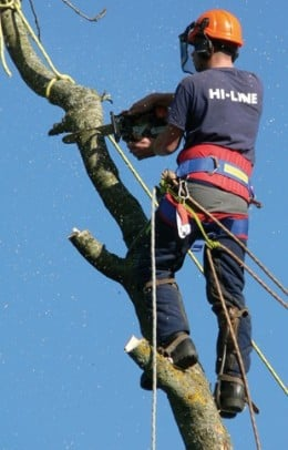 Tree Surgeons Often Have Timber to Spare