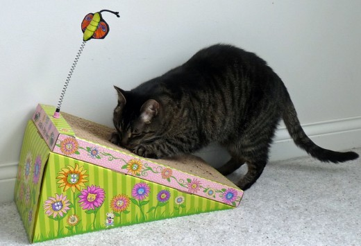 Many cats love corrugated cardboard scratchers. This my cat using the Fat Cat Big Mama's Scratch 'n Play Ramp for Cats with Catnip.