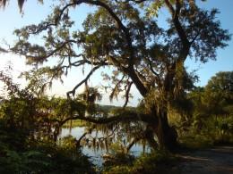 Photo taken from the Hampton Inn in Beaufort, South Carolina