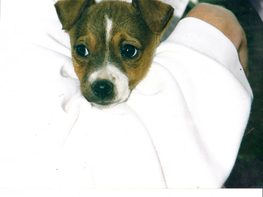 Cookie on Christmas Day when she was six weeks old.