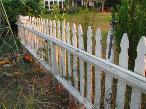 Our 10 year old picket garden fence.