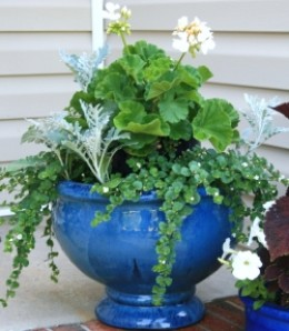 A two-tier pot at one week old. As the flowers grow, the inner pot will become completely obscured.