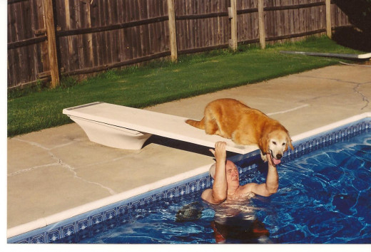 The pool and the dog make good articles.