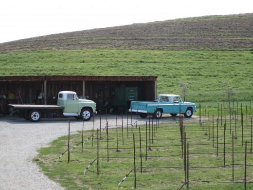 Some vintage trucks
