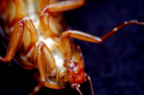 Roach - Upside Down. Up Close and Personal.