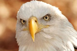 THE EAGLE  LEADERSHIP PHILOSHOPHY- 6 Positive Leadership Traits of  Eagle Man Should Learn From