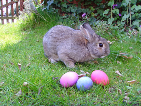 A bunny with Easter eggs.