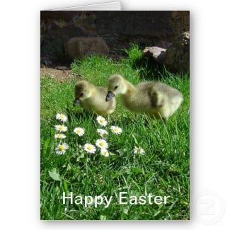 Our Easter cards feature flowers, goslings, Easter chicks, Easter Eggs and Easter bunnies. You can personalize them to make them really special. See all my Les Trois Chenes Easter cards here