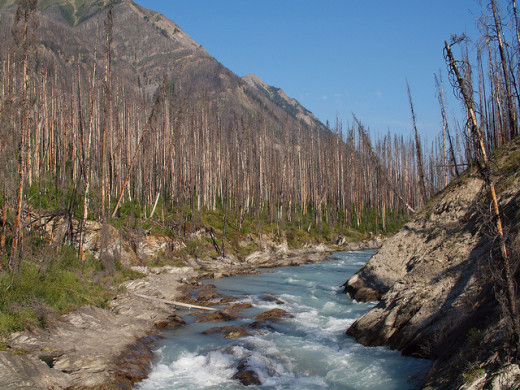 Forest fires have left their mark on Kootenay National Park. Extensive burn areas are visible from the highway as you approach the park gates.
