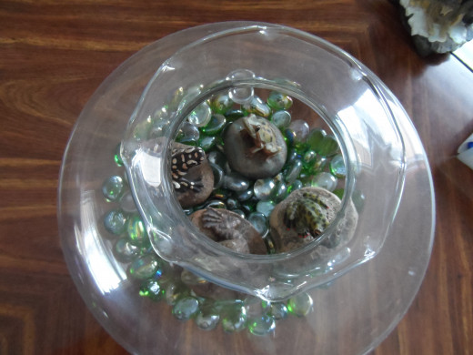 Frogs and glass marbles inside a glass bowl and interest
