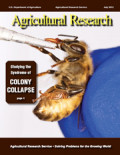 Colony Collapse Disorder: From Bees to not so many Bees