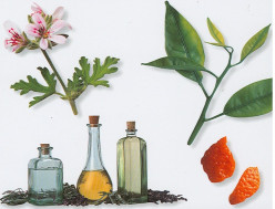 Uses for essential oils for your body and home.