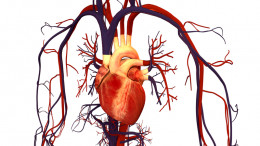 The human heart, lungs and brain can all be vulnerable to embolisms.