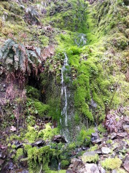 A beautiful trickle fall down a mossy rock.