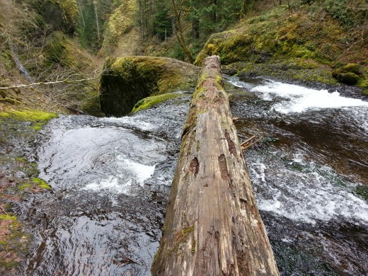 A walkable log bridge to get us to the waterfall's edge.