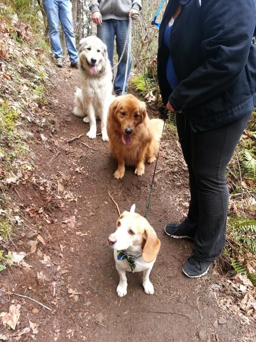 TrailDudes TrailDogs hiking along their friends.