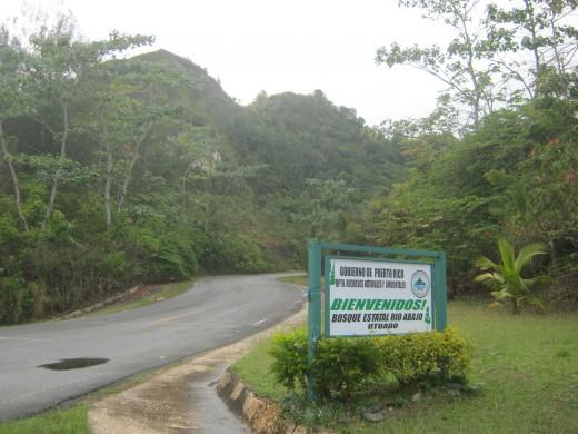 Forest Rio Abajo, Utuado, PR