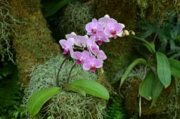 Another beautiful orchid plant.  I love these orchids and love to photograph them.