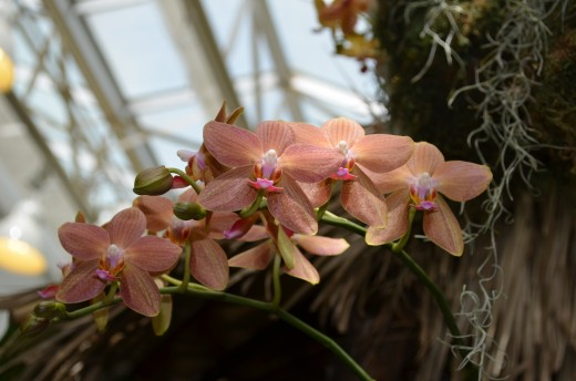 Orange and pink orchid spray picture.