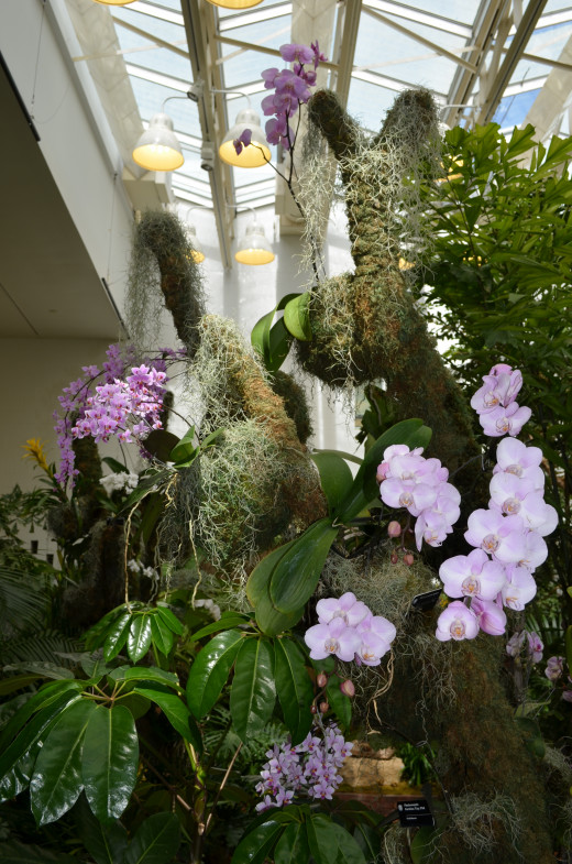 Picture of a larger arrangement of orchids, displayed in a beautiful way.