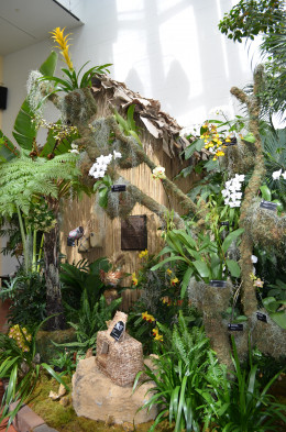 Madagascar Orchid Show display.