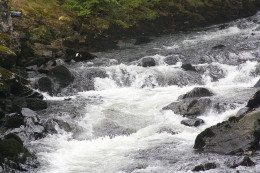 Salmon climb the Ketchikan River to spawn and anglers can catch them along the way