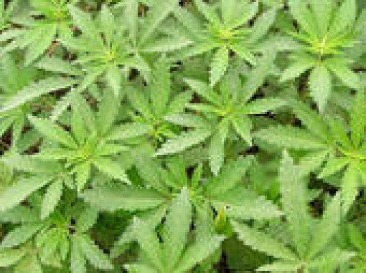 weeds? huh? NOT!!!!