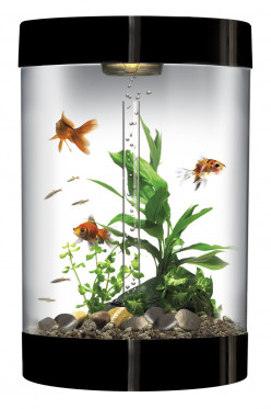 Cool fish tanks for sale you really should not miss out for Cool fish tanks for sale