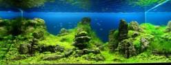 The Basics of a Planted Aquarium