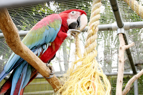 Photo: Macaw in Large Cage