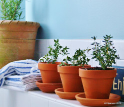 Bathtub Herbs