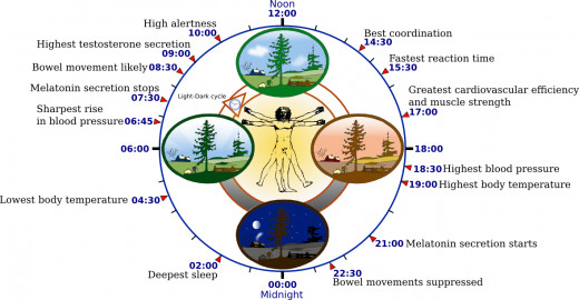 Our Biological Clock