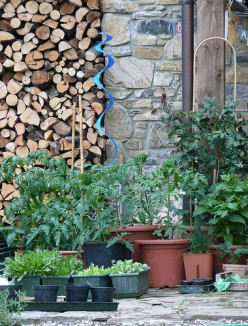 Easy Tips for Container Gardening